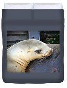 Baby Seal Duvet Cover