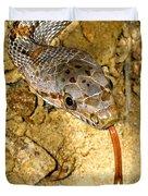 Bairds Rat Snake Tongue Flick Duvet Cover