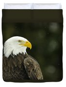 Bald Eagle In Ecomuseum Zoo Duvet Cover