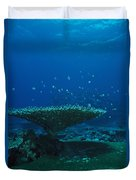 Banded Damselfish Swim Duvet Cover