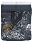 Barbary Macaque Male With Infant Duvet Cover