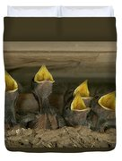 Barn Swallow Hirundo Rustica Chicks Duvet Cover by Cyril Ruoso