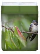 Barn Swallow Hirundo Rustica Fledgling Duvet Cover by Cyril Ruoso