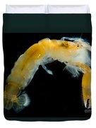 Bay Ghost Shrimp Duvet Cover