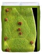 Bean Leaf With Rust Pustules Duvet Cover