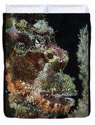 Bearded Scorpionfish, Indonesia Duvet Cover