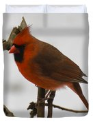 Beautiful Cardinal Duvet Cover