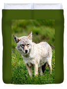 Beautiful Coyote In Alaska Duvet Cover