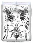 Bee Anatomy Historical Illustration Duvet Cover