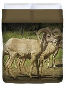 Bighorn Sheep Along A Roadside In The Black Hills Duvet Cover