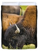 Bison Grazing, Northern British Columbia Duvet Cover