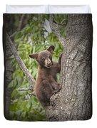 Black Bear Cub Hanging On Duvet Cover