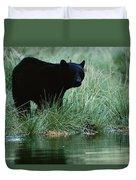 Black Bear Ursus Americanus Duvet Cover