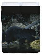 Black Bear With Her Young Cub Tagging Duvet Cover