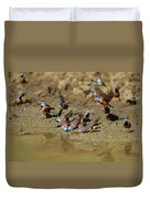 Black-throated Finches At Waterhole Duvet Cover