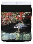 Blackfin Squirrelfish Swimming Duvet Cover