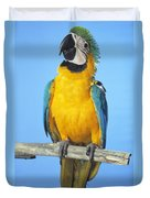 Blue-and-gold Macaw Duvet Cover