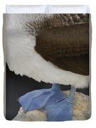 Blue-footed Booby Sula Nebouxii Duvet Cover by Pete Oxford