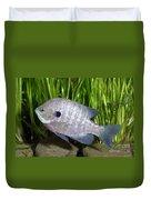 Bluegill Lepomis Macrochirus Duvet Cover