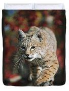 Bobcat Felis Rufus Duvet Cover