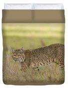 Bobcat Female Walking Santa Cruz Duvet Cover by Sebastian Kennerknecht