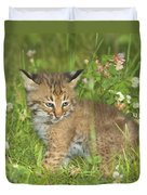 Bobcat Kitten Duvet Cover by John Pitcher