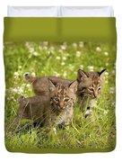 Bobcat Kittens Duvet Cover