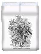 Botany: Ficus Elastica Duvet Cover