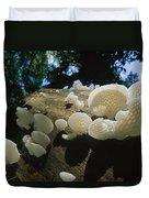 Bracket Fungus Favolus Brasiliensis Duvet Cover