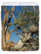 Bristlecone Pine Duvet Cover