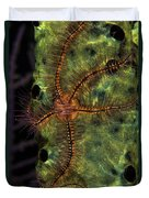Brittle Star On Sponge, Belize Duvet Cover