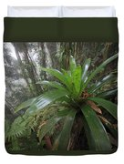 Bromeliad And Tree Ferns Colombia Duvet Cover