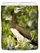 Brown Booby Sula Leucogaster Duvet Cover