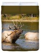 Bugling Bull Elk And 2 Female Cows In Estes Lake  Co Duvet Cover