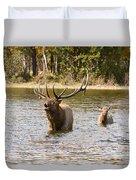 Bugling Bull Elk And Calf Colorado Rut  Duvet Cover