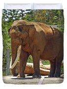 Bull Elephant Duvet Cover