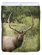 Bull Elk Eyes Duvet Cover by James BO  Insogna