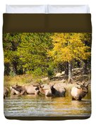 Bull Elk Watching Over Herd 5 Duvet Cover
