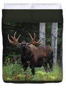 Bull Moose Flehmen Duvet Cover