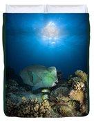 Bumphead Parrotfish, Australia Duvet Cover