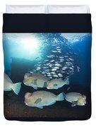 Bumphead Parrotfish Duvet Cover