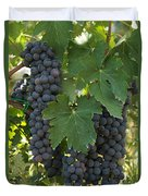 Bunches Of Sangiovese Grapes Hang Duvet Cover