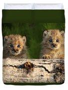 Canadian Lynx Kittens Looking Duvet Cover
