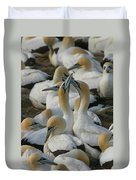 Cape Gannets Duvet Cover
