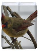 Cardinal Cold Winter Stare Duvet Cover