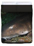 Cat Shark Sleeping, Pulau Tioman Duvet Cover