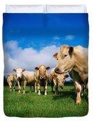 Cattle, Charolais Duvet Cover