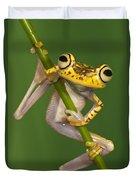Chachi Tree Frog Hypsiboas Picturatus Duvet Cover
