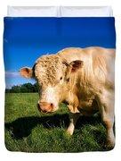 Charolais Bull, Ireland Duvet Cover