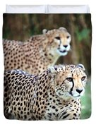 Cheetah Brothers Duvet Cover
